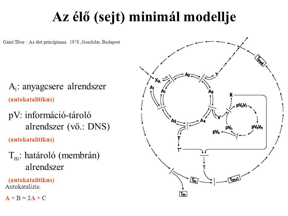 Az élő (sejt) minimál modellje Gánti Tibor : Az élet principiuma. 1978.,Gondolat, Budapest A i : anyagcsere alrendszer (autokatalitikus) pV: informáci
