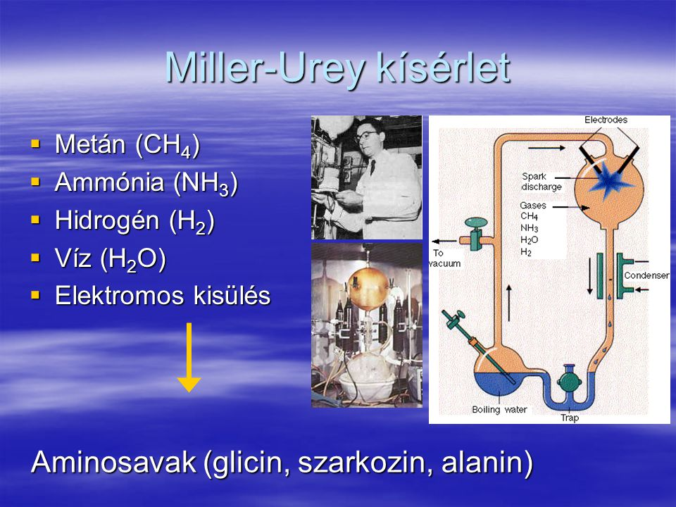 Miller-Urey kísérlet  Metán (CH 4 )  Ammónia (NH 3 )  Hidrogén (H 2 )  Víz (H 2 O)  Elektromos kisülés Aminosavak (glicin, szarkozin, alanin)