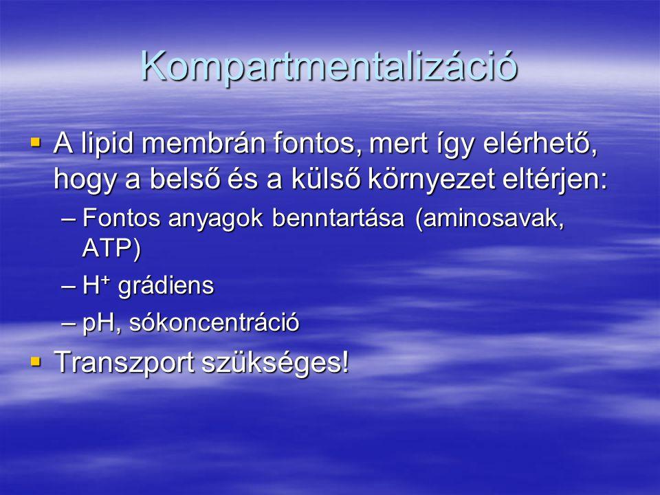 Kompartmentalizáció  A lipid membrán fontos, mert így elérhető, hogy a belső és a külső környezet eltérjen: –Fontos anyagok benntartása (aminosavak, ATP) –H + grádiens –pH, sókoncentráció  Transzport szükséges!