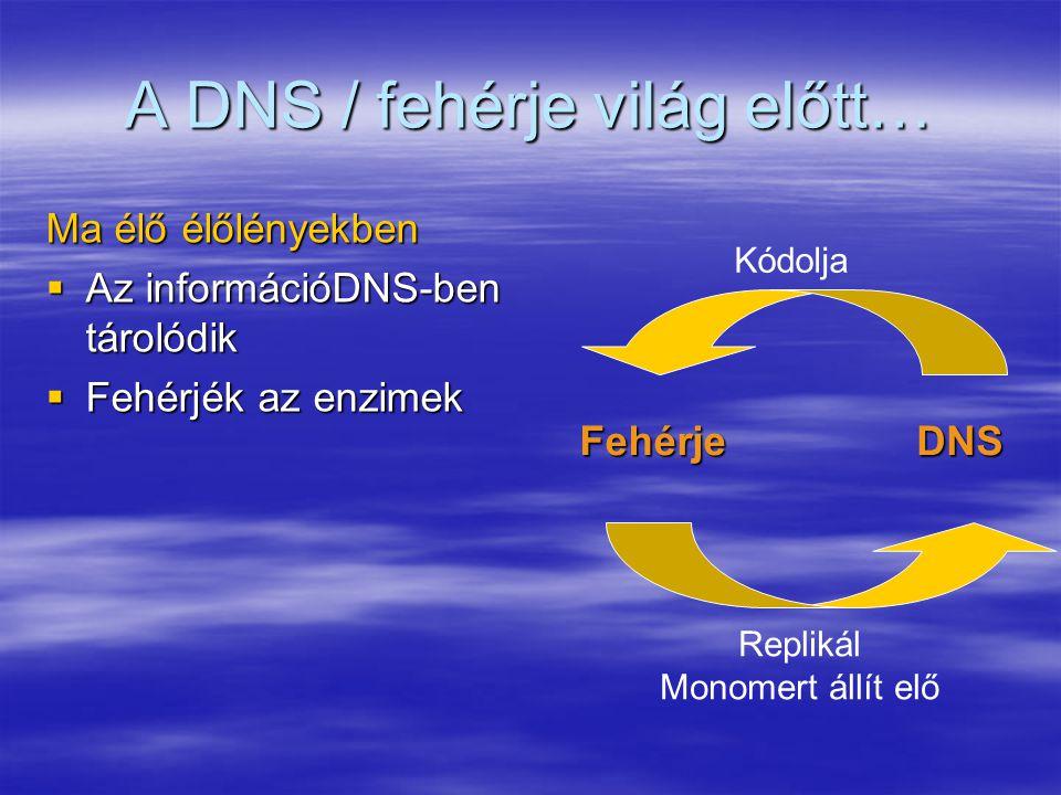 A DNS / fehérje világ előtt… Ma élő élőlényekben  Az információDNS-ben tárolódik  Fehérjék az enzimek FehérjeDNS Kódolja Replikál Monomert állít elő
