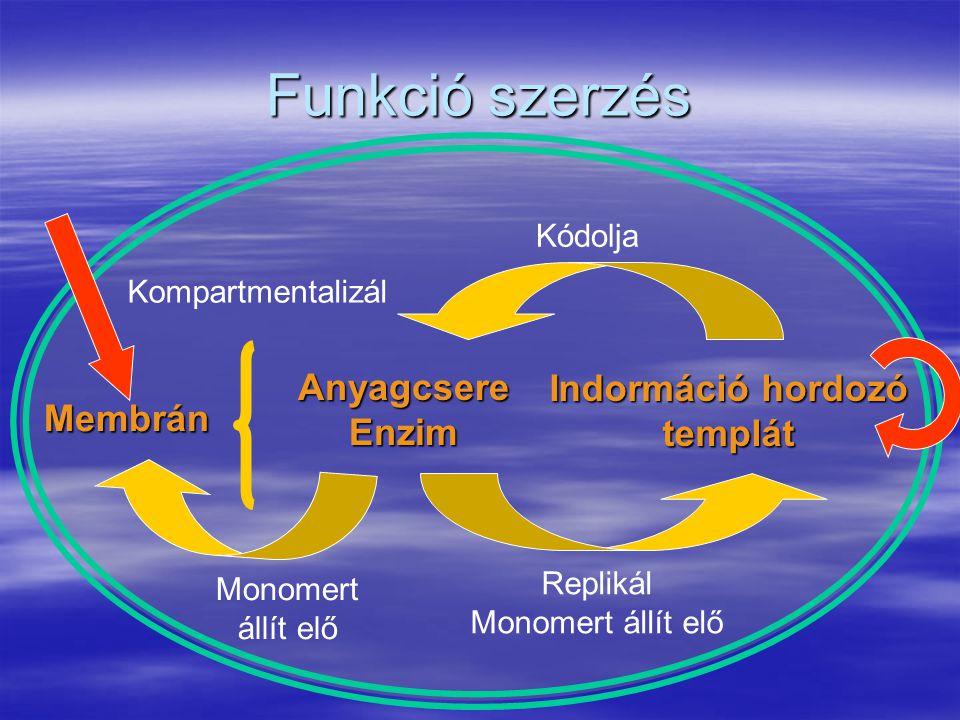 Funkció szerzés AnyagcsereEnzim Indormáció hordozó templát Kódolja Replikál Monomert állít elő Membrán Monomert állít elő Kompartmentalizál