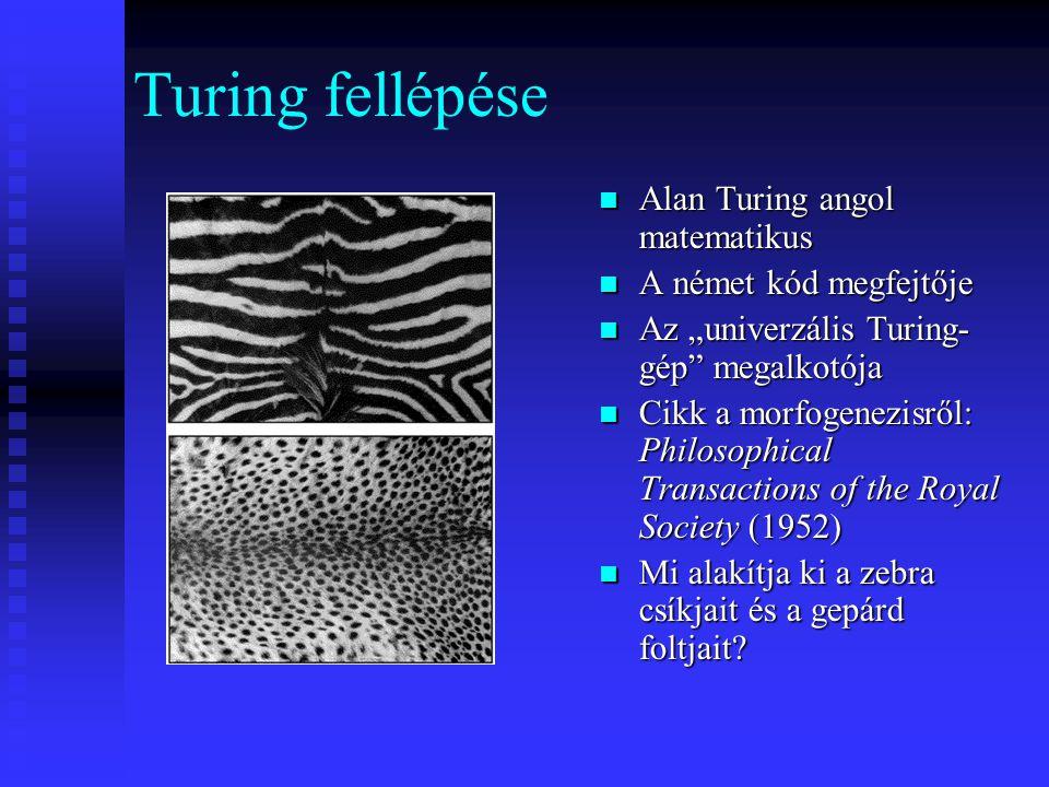 """Turing fellépése Alan Turing angol matematikus A német kód megfejtője Az """"univerzális Turing- gép megalkotója Cikk a morfogenezisről: Philosophical Transactions of the Royal Society (1952) Mi alakítja ki a zebra csíkjait és a gepárd foltjait"""