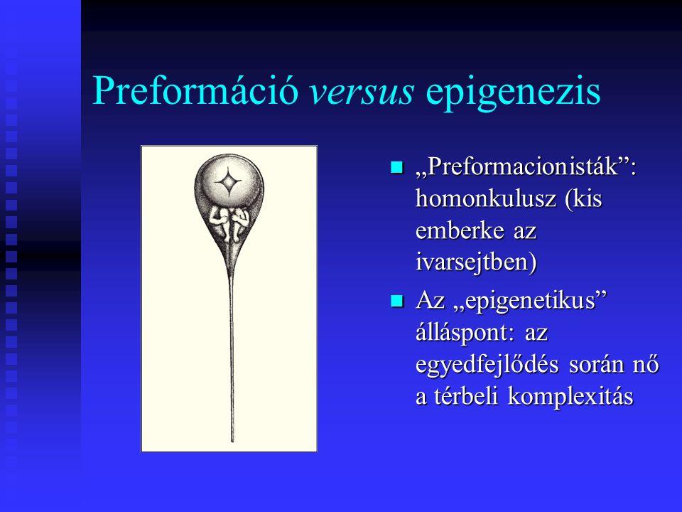 """Preformáció versus epigenezis """"Preformacionisták : homonkulusz (kis emberke az ivarsejtben) Az """"epigenetikus álláspont: az egyedfejlődés során nő a térbeli komplexitás"""