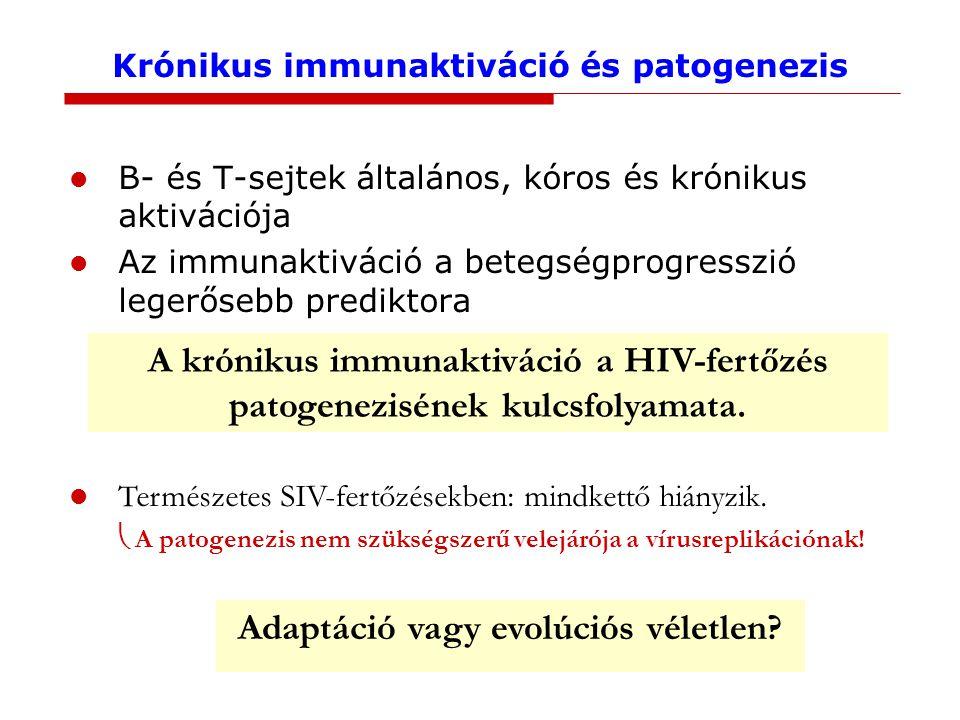 Krónikus immunaktiváció és patogenezis B- és T-sejtek általános, kóros és krónikus aktivációja Az immunaktiváció a betegségprogresszió legerősebb prediktora A krónikus immunaktiváció a HIV-fertőzés patogenezisének kulcsfolyamata.