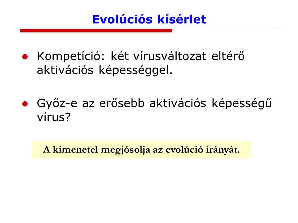 Evolúciós kísérlet Kompetíció: két vírusváltozat eltérő aktivációs képességgel.