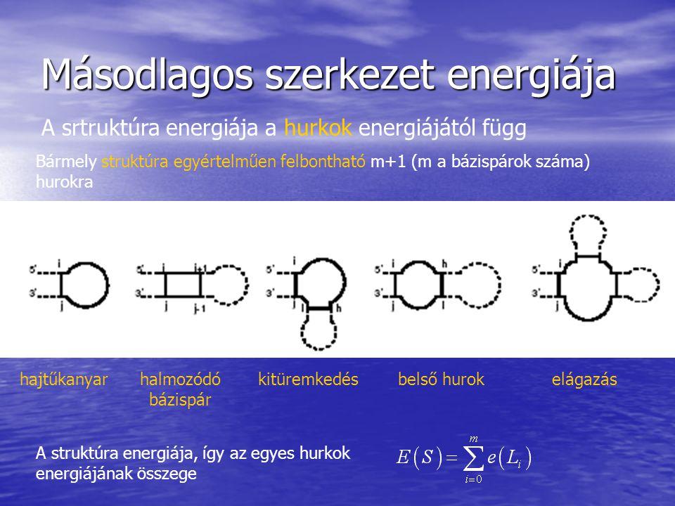 Másodlagos szerkezet energiája hajtűkanyar halmozódó bázispár kitüremkedésbelső hurok elágazás A srtruktúra energiája a hurkok energiájától függ Bármely struktúra egyértelműen felbontható m+1 (m a bázispárok száma) hurokra A struktúra energiája, így az egyes hurkok energiájának összege
