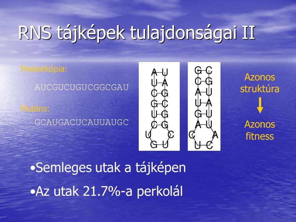 RNS tájképek tulajdonságai II AUCGUCUGUCGGCGAU GCAUGACUCAUUAUGC Mesterkópia: Mutáns: Semleges utak a tájképen Az utak 21.7%-a perkolál Azonos struktúr