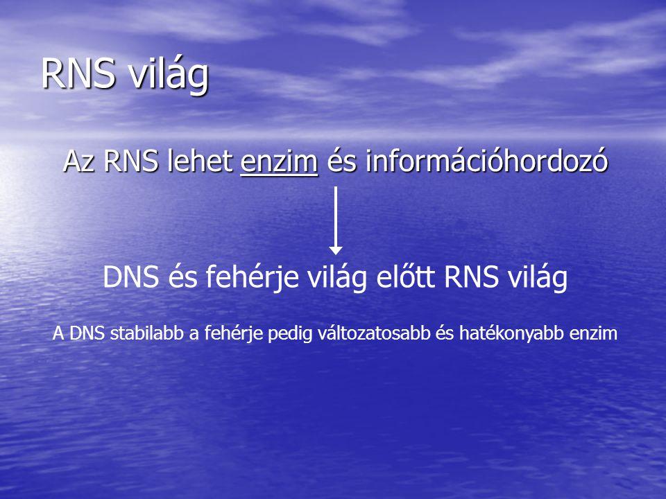 RNS világ 1.RNS világ bizonyítékai 2. RNS világ lehetőségei 3.