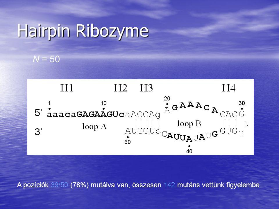 Hairpin Ribozyme N = 50 A pozíciók 39/50 (78%) mutálva van, összesen 142 mutáns vettünk figyelembe