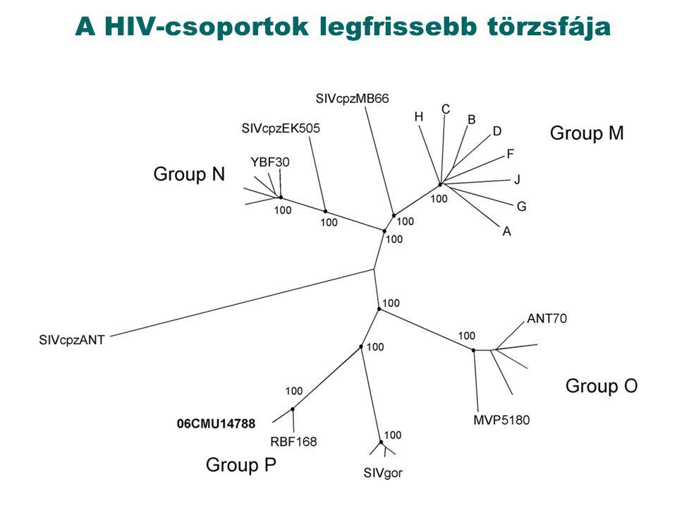 A HIV-csoportok legfrissebb törzsfája