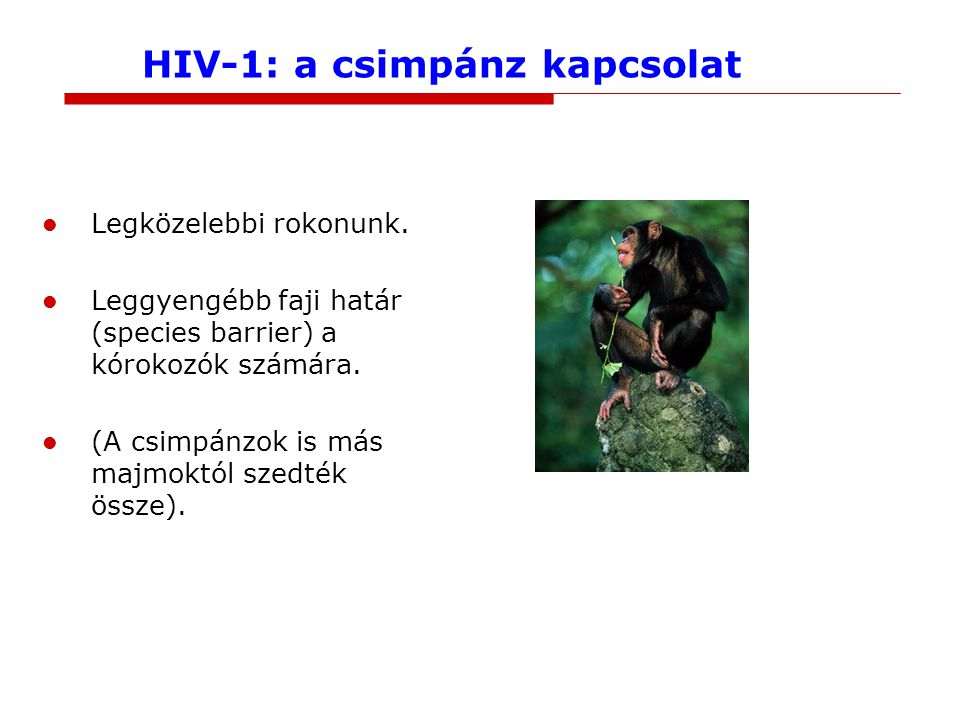 HIV-1: a csimpánz kapcsolat Legközelebbi rokonunk. Leggyengébb faji határ (species barrier) a kórokozók számára. (A csimpánzok is más majmoktól szedté