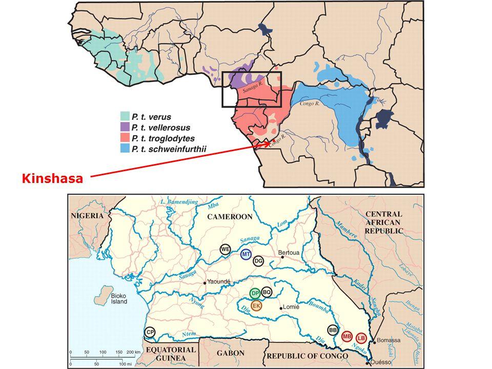 . Kinshasa