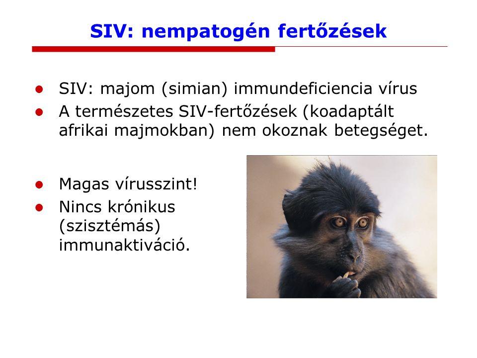 SIV: nempatogén fertőzések SIV: majom (simian) immundeficiencia vírus A természetes SIV-fertőzések (koadaptált afrikai majmokban) nem okoznak betegség