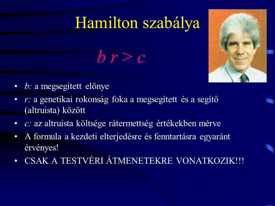 Hamilton szabálya b r > c b: a megsegített előnye r: a genetikai rokonság foka a megsegített és a segítő (altruista) között c: az altruista költsége rátermettség értékekben mérve A formula a kezdeti elterjedésre és fenntartásra egyaránt érvényes.