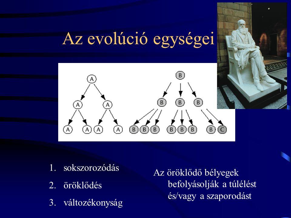 Az evolúció egységei Az öröklődő bélyegek befolyásolják a túlélést és/vagy a szaporodást 1.sokszorozódás 2.öröklődés 3.változékonyság