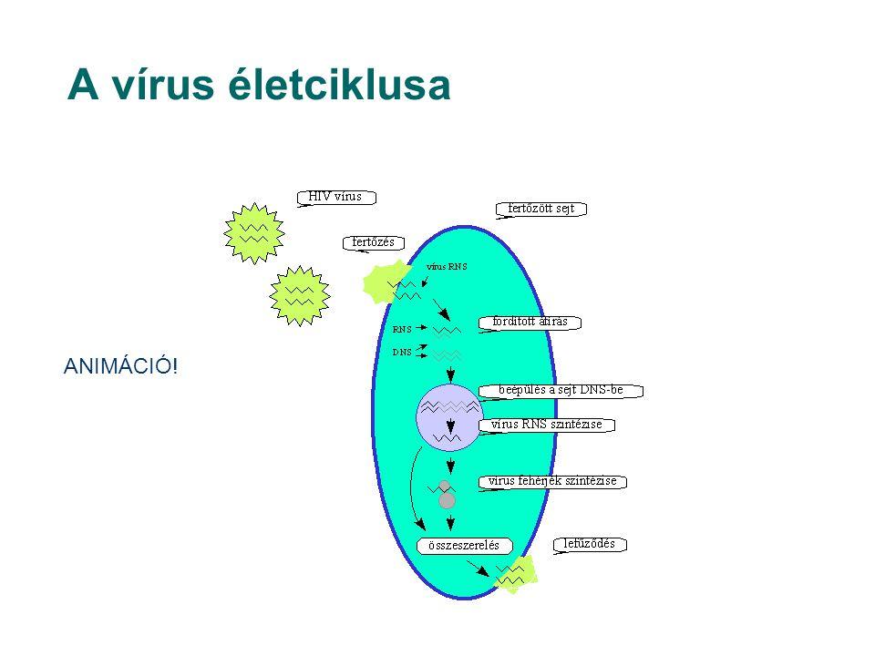 A vírus életciklusa ANIMÁCIÓ!
