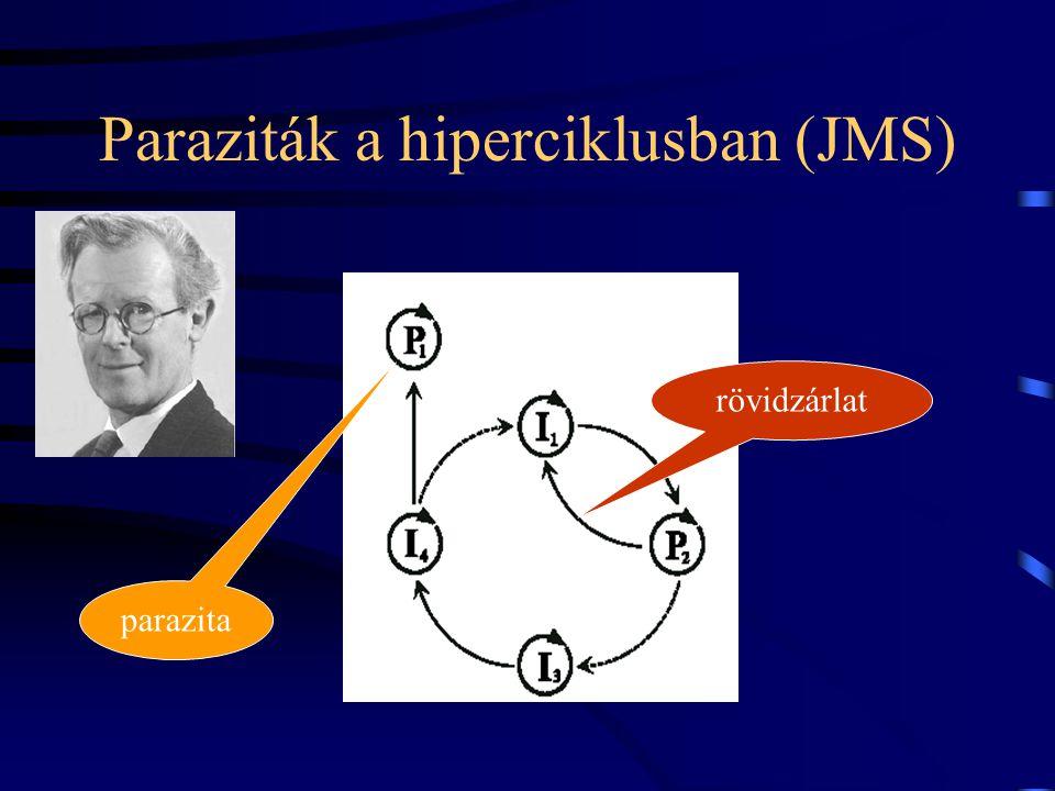 A molekuláris hiperciklus (Eigen, 1971) autokatalízis heterokatalitikus segítség