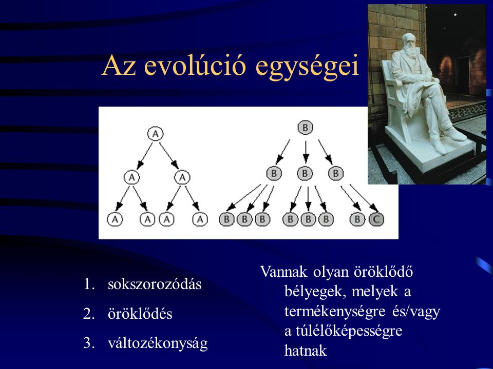 Az evolúció egységei Vannak olyan öröklődő bélyegek, melyek a termékenységre és/vagy a túlélőképességre hatnak 1.sokszorozódás 2.öröklődés 3.változékonyság