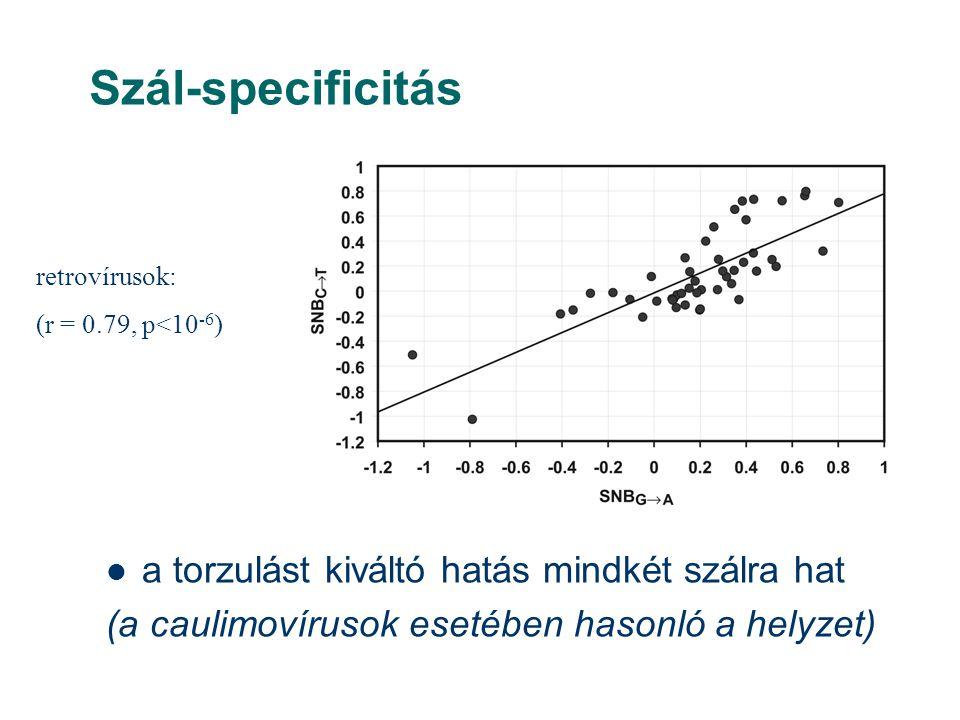 Szál-specificitás a torzulást kiváltó hatás mindkét szálra hat (a caulimovírusok esetében hasonló a helyzet) retrovírusok: (r = 0.79, p<10 -6 )