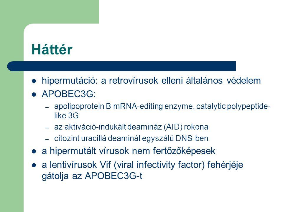 Háttér hipermutáció: a retrovírusok elleni általános védelem APOBEC3G: – apolipoprotein B mRNA-editing enzyme, catalytic polypeptide- like 3G – az aktiváció-indukált deamináz (AID) rokona – citozint uracillá deaminál egyszálú DNS-ben a hipermutált vírusok nem fertőzőképesek a lentivírusok Vif (viral infectivity factor) fehérjéje gátolja az APOBEC3G-t