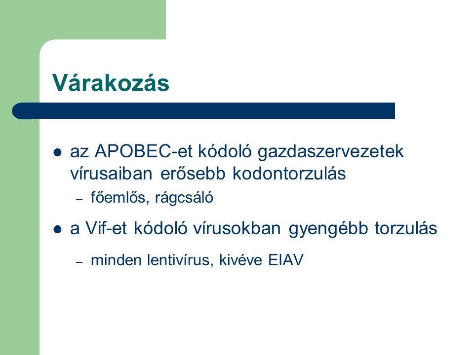 Várakozás az APOBEC-et kódoló gazdaszervezetek vírusaiban erősebb kodontorzulás – főemlős, rágcsáló a Vif-et kódoló vírusokban gyengébb torzulás – minden lentivírus, kivéve EIAV