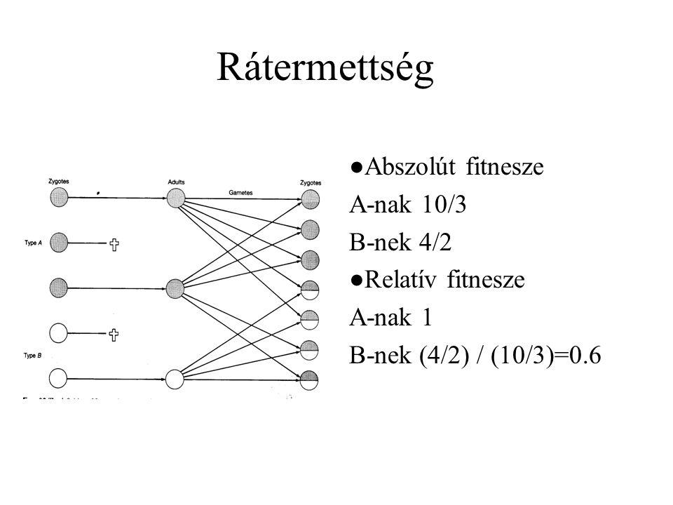 Rátermettség ●Abszolút fitnesze A-nak 10/3 B-nek 4/2 ●Relatív fitnesze A-nak 1 B-nek (4/2) / (10/3)=0.6