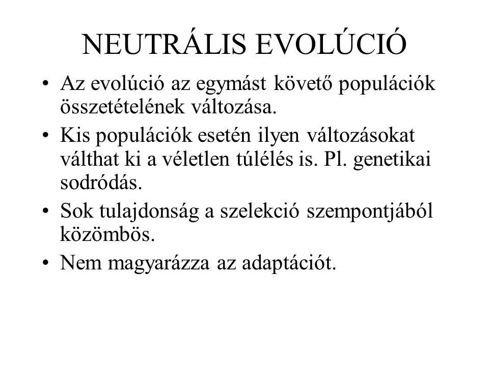 NEUTRÁLIS EVOLÚCIÓ Az evolúció az egymást követő populációk összetételének változása. Kis populációk esetén ilyen változásokat válthat ki a véletlen t