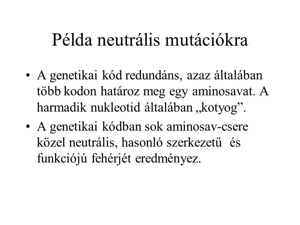 """Példa neutrális mutációkra A genetikai kód redundáns, azaz általában több kodon határoz meg egy aminosavat. A harmadik nukleotid általában """"kotyog"""". A"""