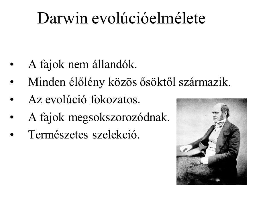 Darwin evolúcióelmélete A fajok nem állandók. Minden élőlény közös ősöktől származik. Az evolúció fokozatos. A fajok megsokszorozódnak. Természetes sz