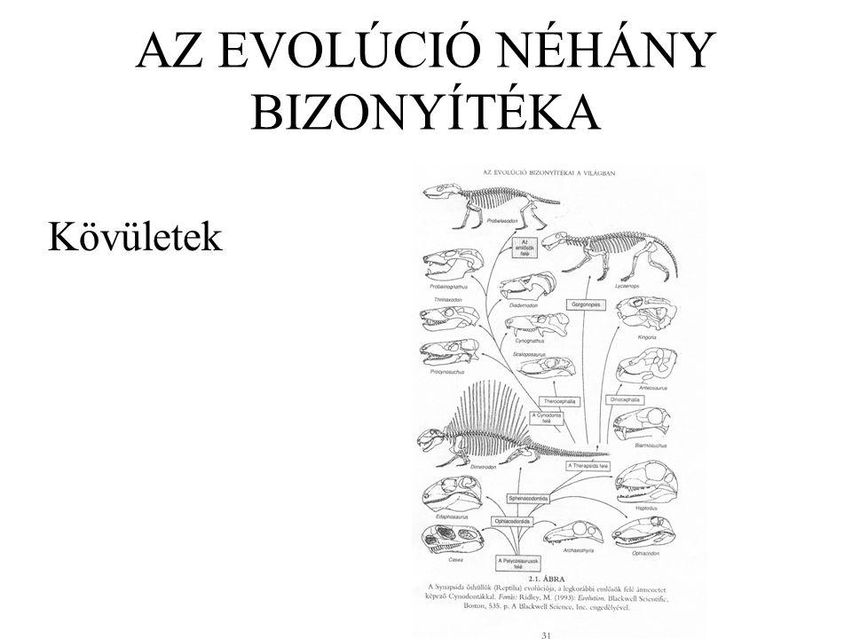 Darwin evolúcióelmélete A fajok nem állandók.Minden élőlény közös ősöktől származik.