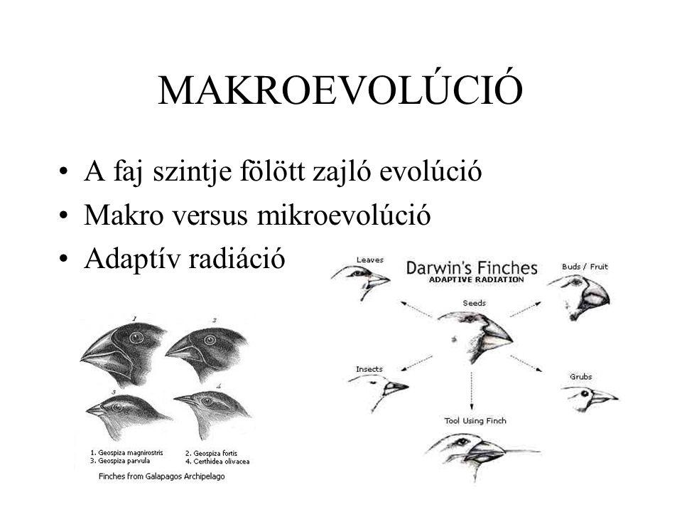 MAKROEVOLÚCIÓ A faj szintje fölött zajló evolúció Makro versus mikroevolúció Adaptív radiáció