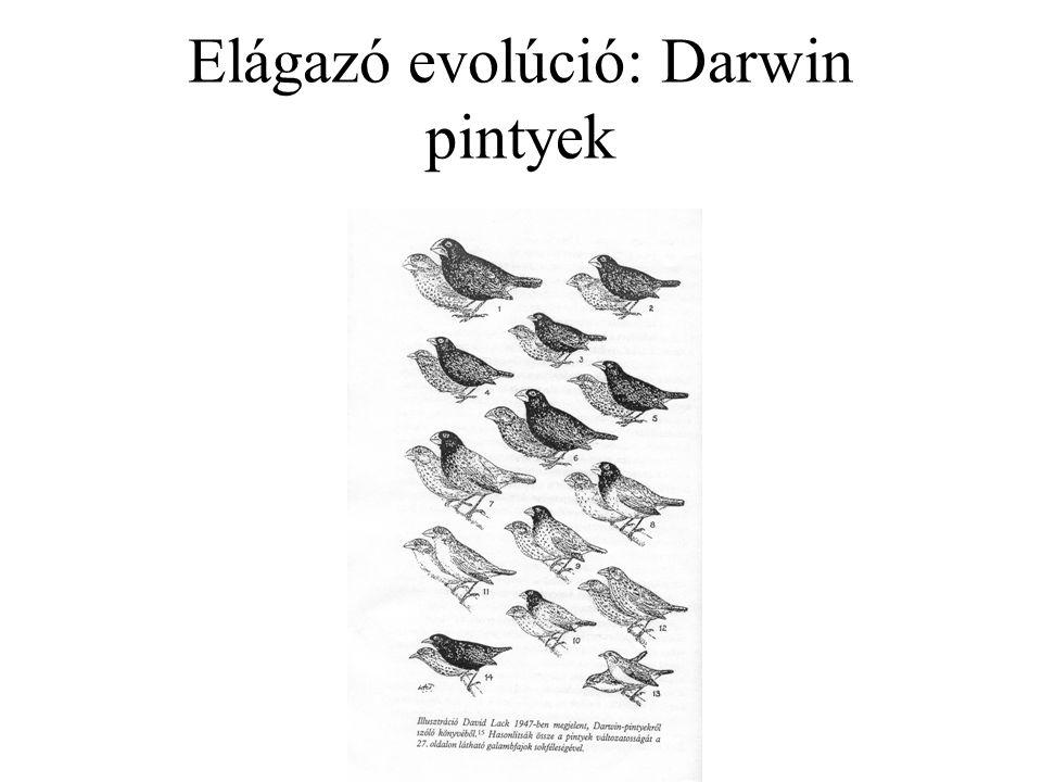Az evolúcióbiológia néhány kulcskérdése: Visszafordíthatók-e egyes evolúciós változások.