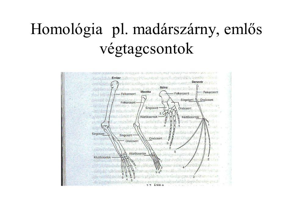 Homológia pl. madárszárny, emlős végtagcsontok