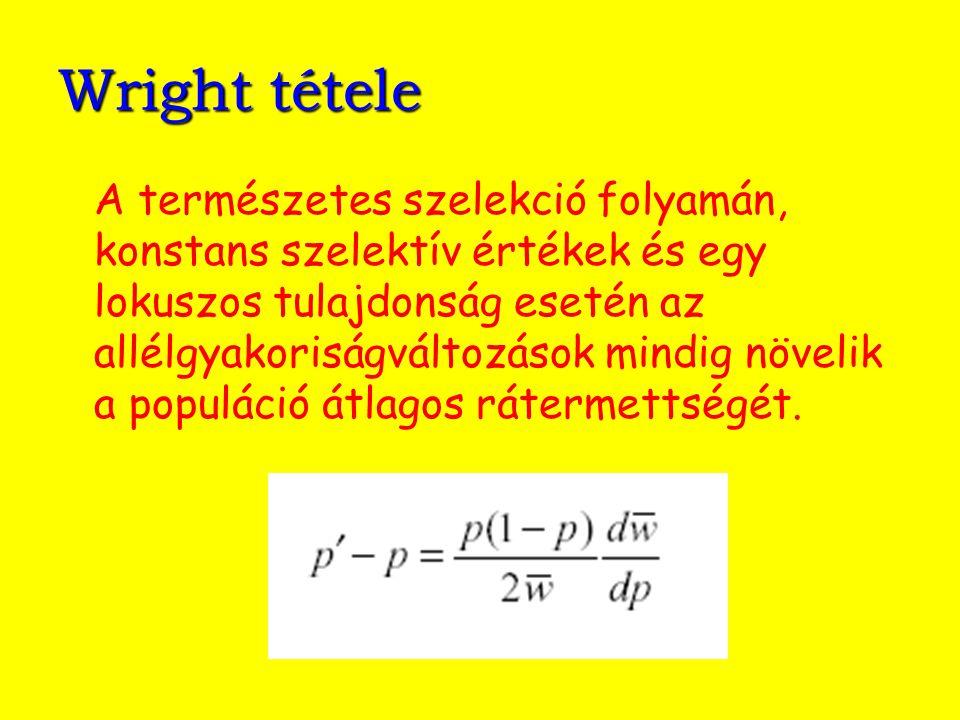 Wright tétele A természetes szelekció folyamán, konstans szelektív értékek és egy lokuszos tulajdonság esetén az allélgyakoriságváltozások mindig növe