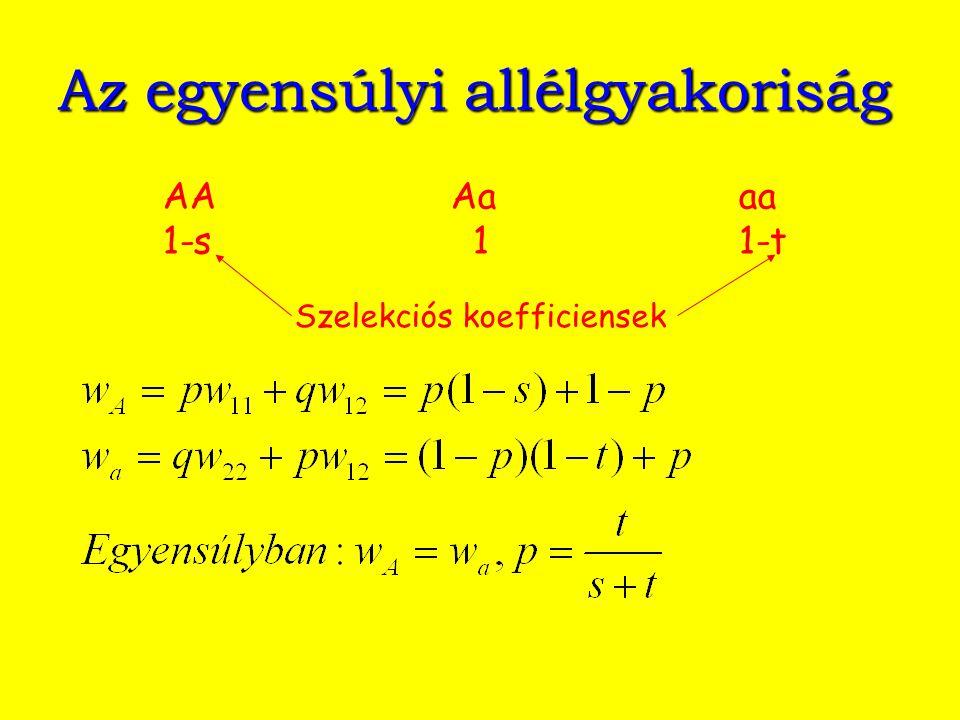 Az egyensúlyi allélgyakoriság AAAaaa 1-s 11-t Szelekciós koefficiensek