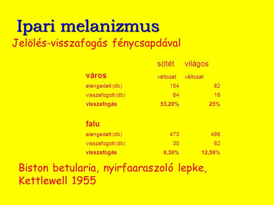 Ipari melanizmus Biston betularia, nyirfaaraszoló lepke, Kettlewell 1955 Jelölés-visszafogás fénycsapdával sötétvilágos város változat elengedett (db)