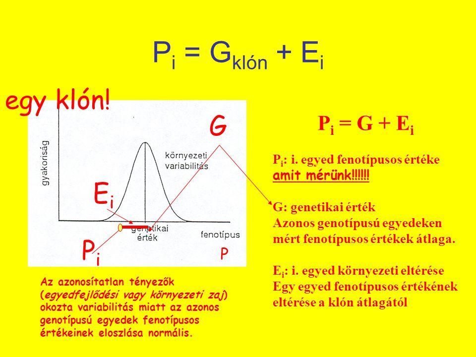 P i = G klón + E i P i = G + E i P i : i. egyed fenotípusos értéke amit mérünk!!!!!! G: genetikai érték Azonos genotípusú egyedeken mért fenotípusos é