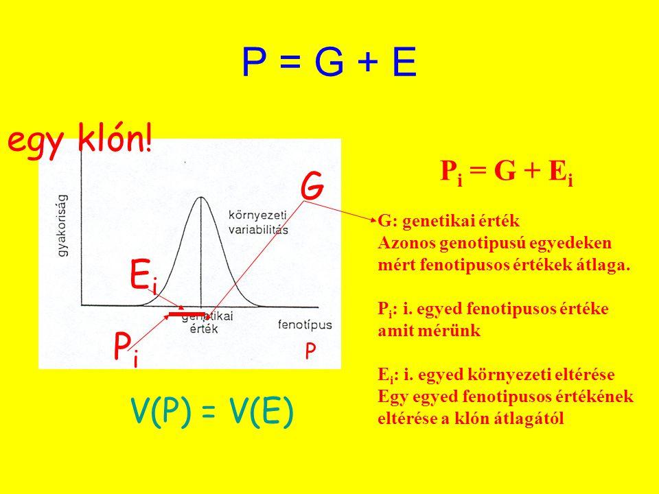 P = G + E P i = G + E i G: genetikai érték Azonos genotipusú egyedeken mért fenotipusos értékek átlaga. P i : i. egyed fenotipusos értéke amit mérünk