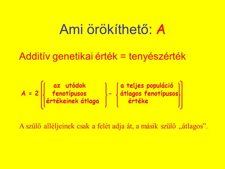 az utódok a teljes populáció A = 2 fenotípusos - átlagos fenotípusos értékeinek átlaga értéke Ami örökíthető: A Additív genetikai érték = tenyészérték