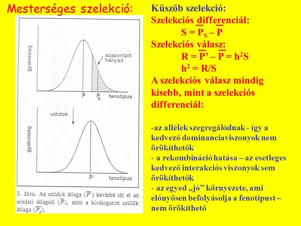 Küszöb szelekció: Szelekciós differenciál: S = P S – P Szelekciós válasz: R = P' – P = h 2 S h 2 = R/S A szelekciós válasz mindig kisebb, mint a szele
