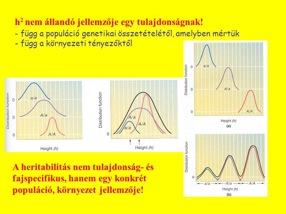 h 2 nem állandó jellemzője egy tulajdonságnak! - függ a populáció genetikai összetételétől, amelyben mértük - függ a környezeti tényezőktől A heritabi