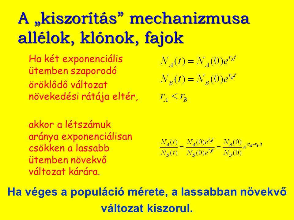 Baktériumtörzsek közti szelekció Dykhuizen, Dean 1990 galaktóz limitált kultúra, 2 ismétlés laktóz limitált kultúra, 3 ismétlés kemosztát, E.