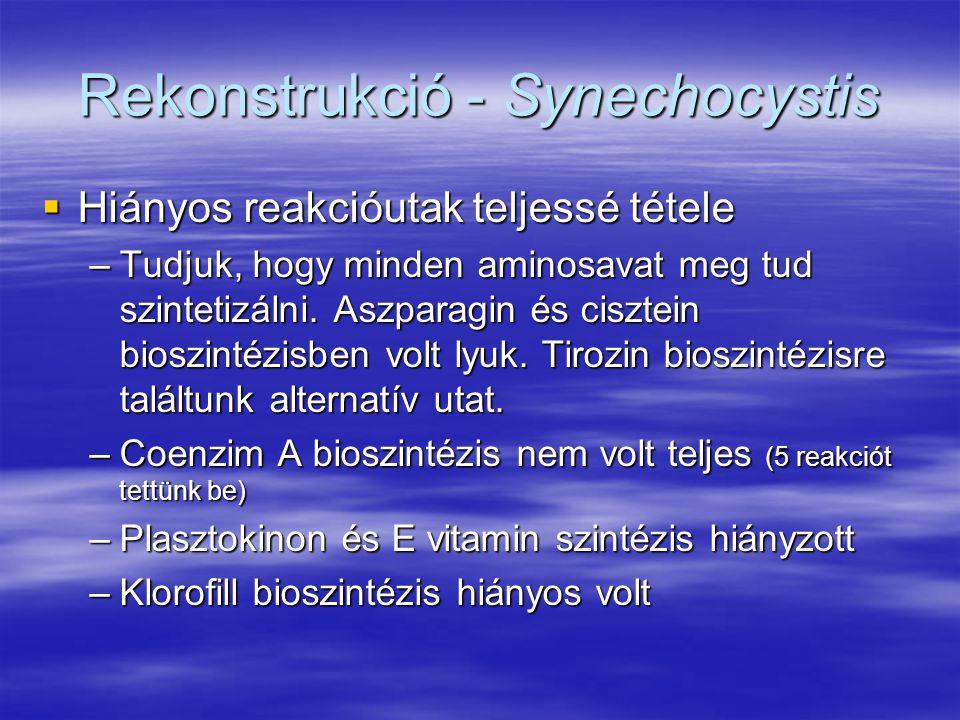 Rekonstrukció - Synechocystis  Hiányos reakcióutak teljessé tétele –Tudjuk, hogy minden aminosavat meg tud szintetizálni. Aszparagin és cisztein bios