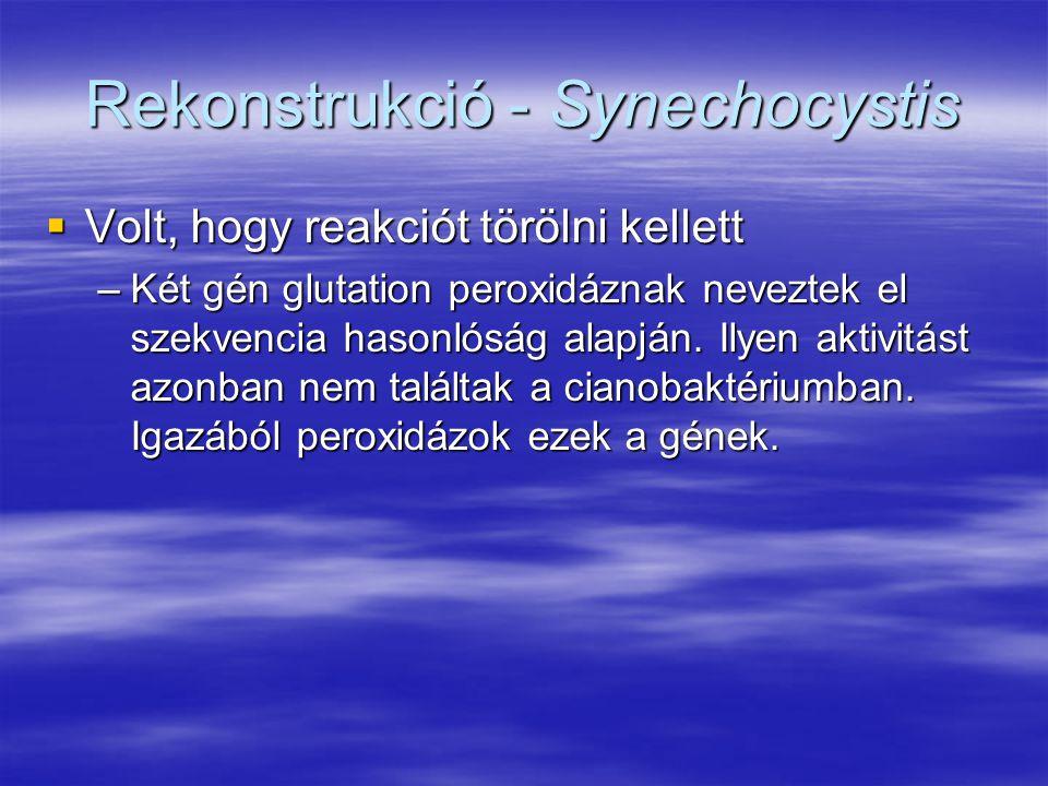 Rekonstrukció - Synechocystis  Volt, hogy reakciót törölni kellett –Két gén glutation peroxidáznak neveztek el szekvencia hasonlóság alapján. Ilyen a