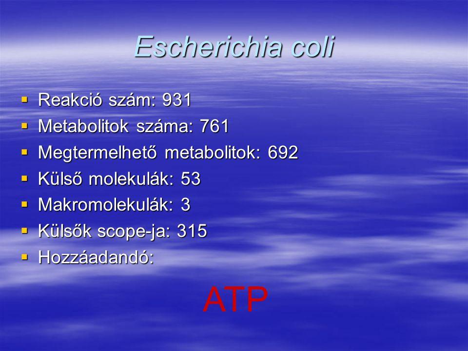 Escherichia coli  Reakció szám: 931  Metabolitok száma: 761  Megtermelhető metabolitok: 692  Külső molekulák: 53  Makromolekulák: 3  Külsők scop
