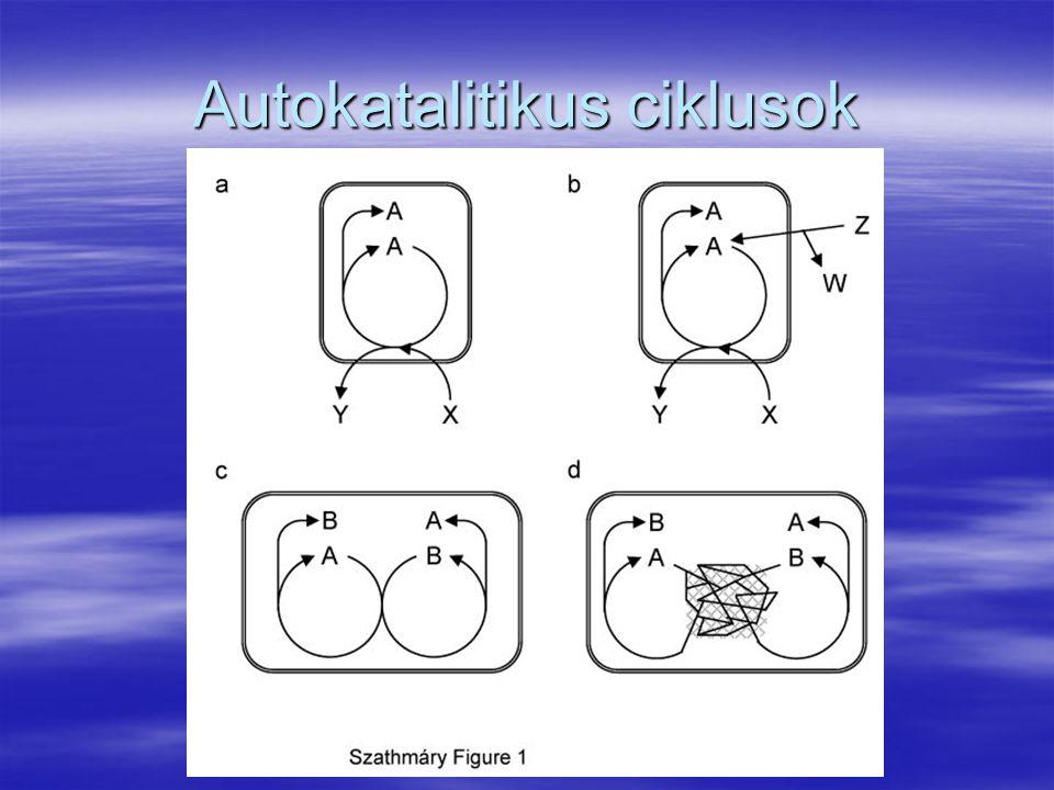 Autokatalitikus ciklusok