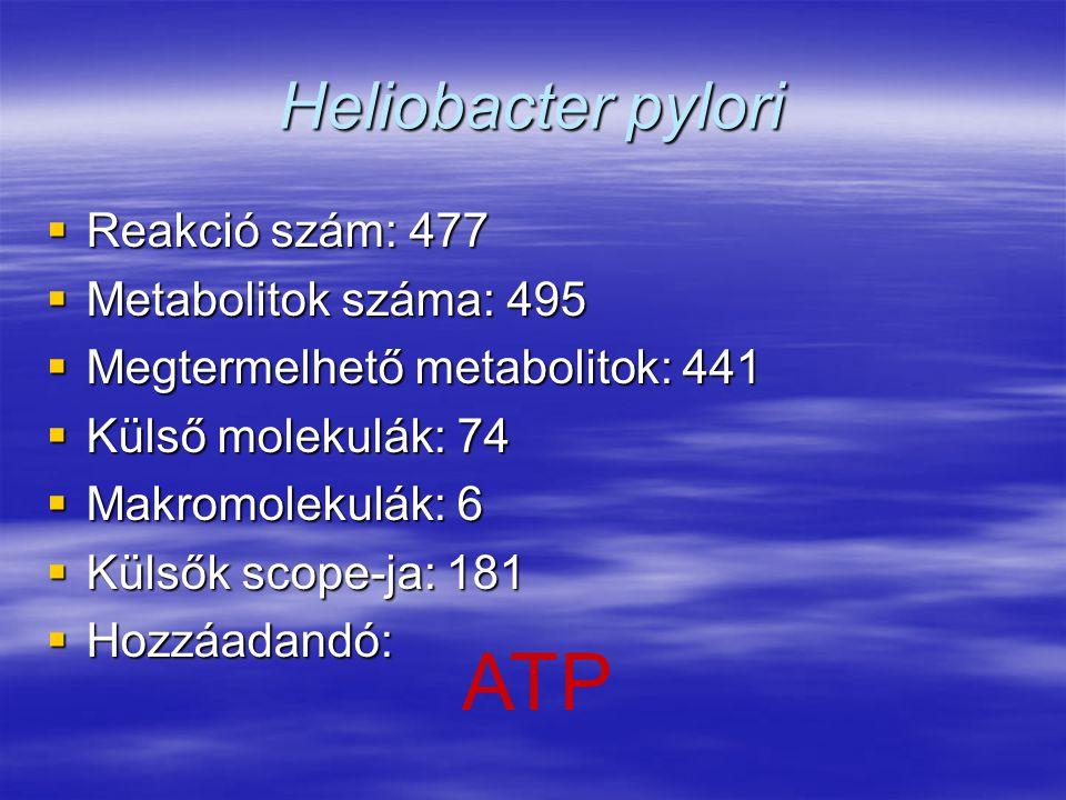 Heliobacter pylori  Reakció szám: 477  Metabolitok száma: 495  Megtermelhető metabolitok: 441  Külső molekulák: 74  Makromolekulák: 6  Külsők sc
