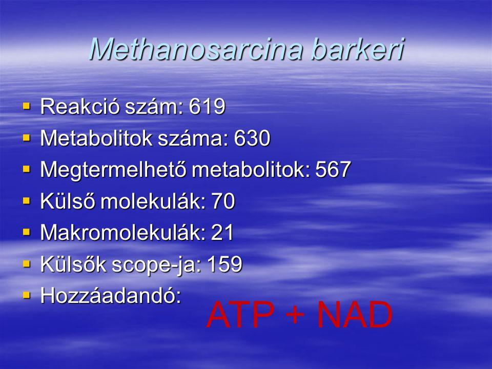 Methanosarcina barkeri  Reakció szám: 619  Metabolitok száma: 630  Megtermelhető metabolitok: 567  Külső molekulák: 70  Makromolekulák: 21  Küls