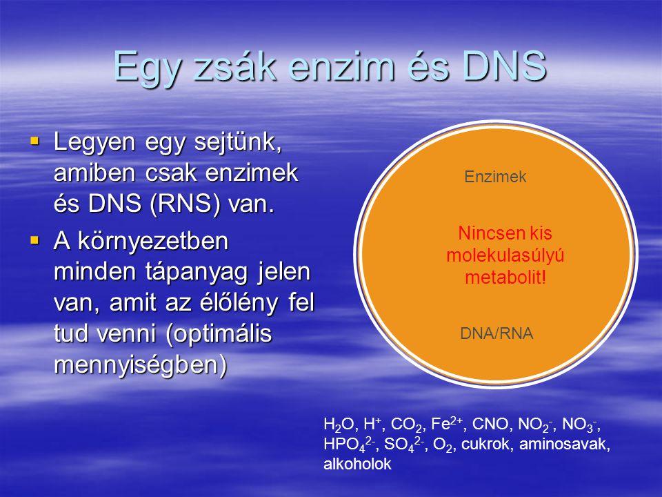 Egy zsák enzim és DNS  Legyen egy sejtünk, amiben csak enzimek és DNS (RNS) van.  A környezetben minden tápanyag jelen van, amit az élőlény fel tud