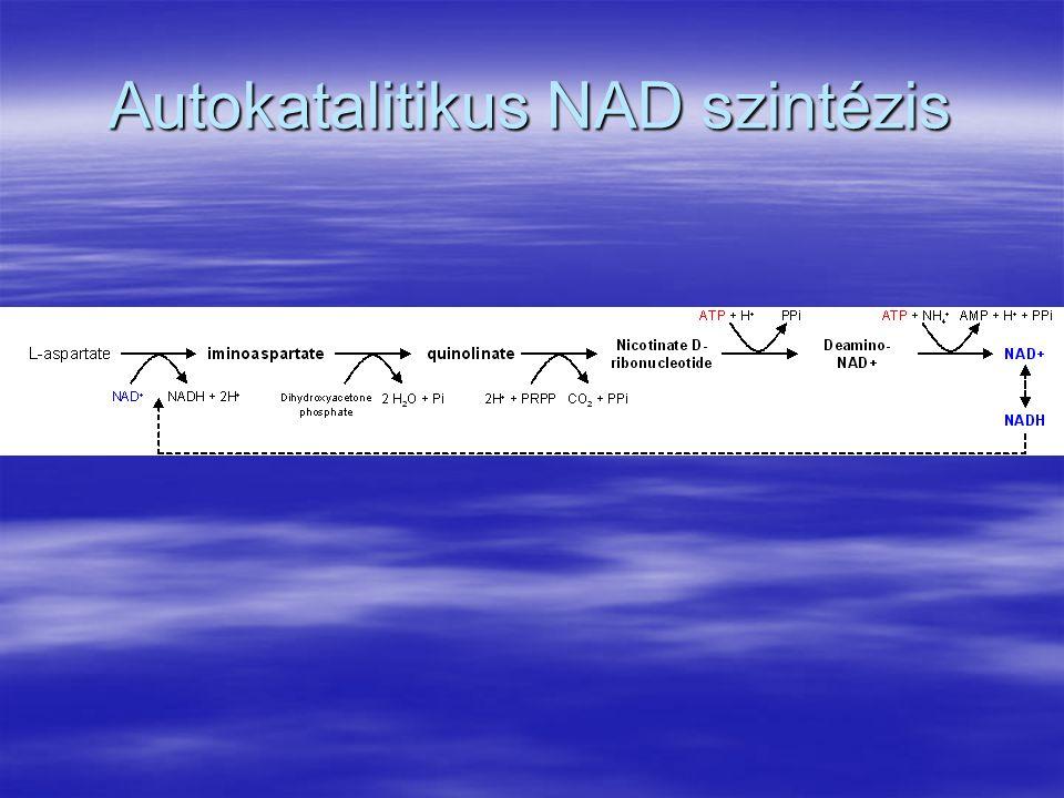 Autokatalitikus NAD szintézis